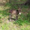 Ein neuer Esel