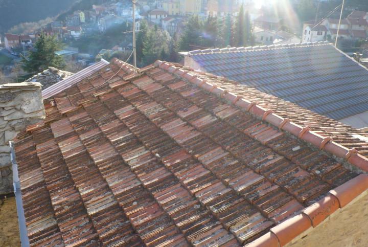 Dächer & Katzen