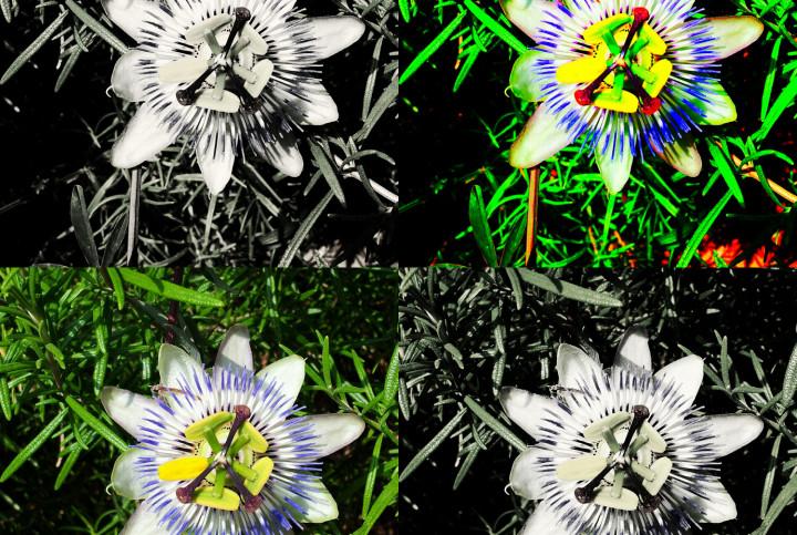 Die unbekannte Blume